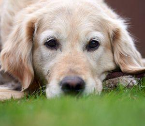 Stütze für die Seele: Wenn ein Hund in unserer Nähe ist, fühlen wir uns nicht so leicht ausgegrenzt (c) Frank Luerweg