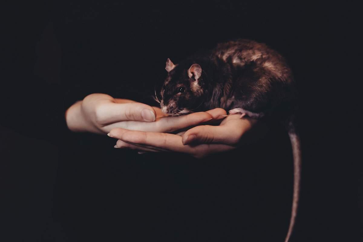 Wissenschaftler der Universität Bonn haben einen neuen Wirkstoff entwickelt, der bei Mäusen Kontaktallergien abmildern kann. (c) freestocks.org / Unsplash
